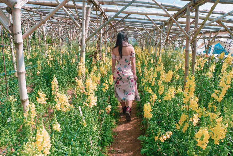 A Girl Walking Through a Yellow Flower Field